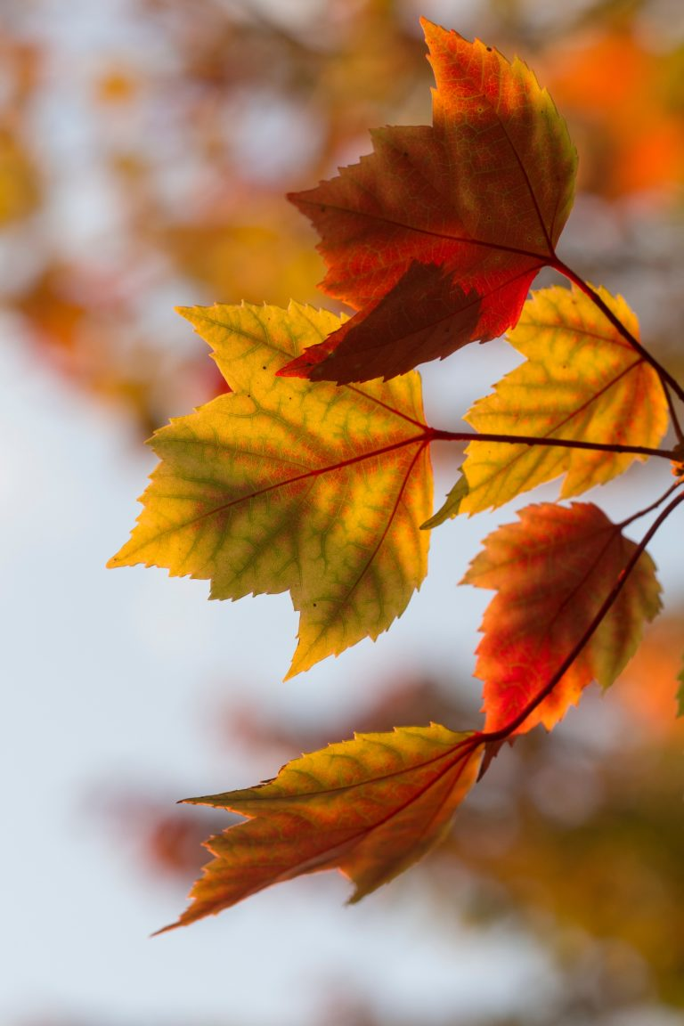 orange and yellow fall leaves
