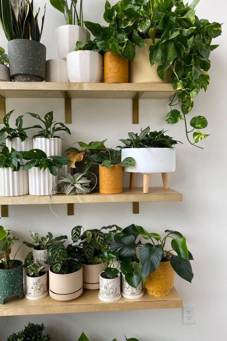 plants on shelves