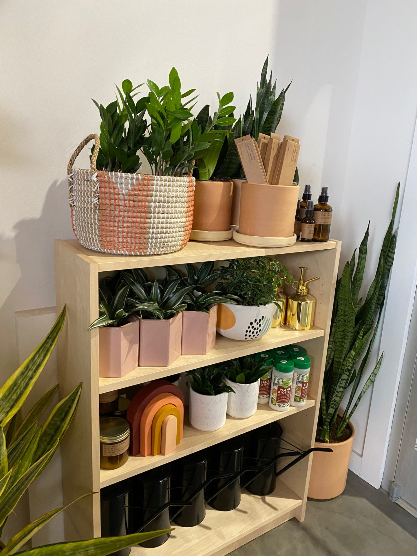 plants on a bookshelf